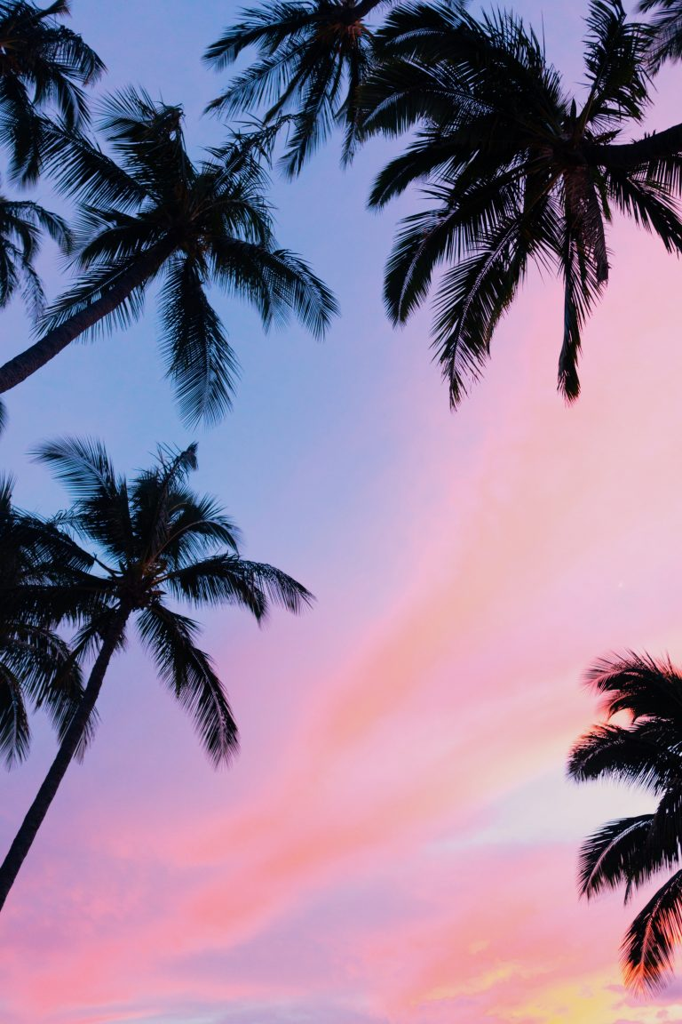 palm wallpaper 144